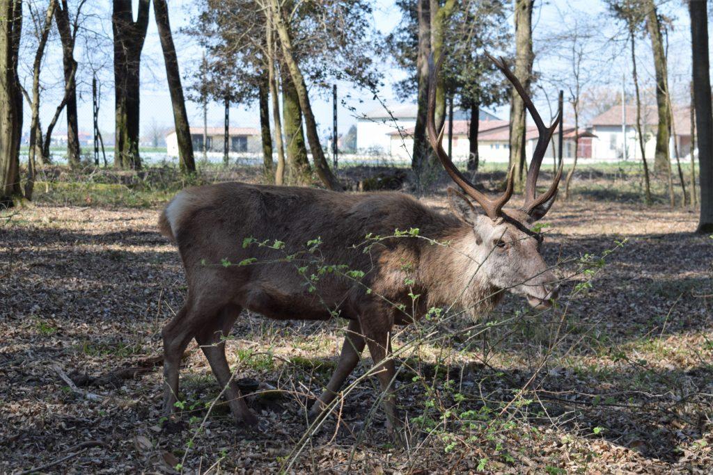 Riserva Naturale Bosco della Mesola
